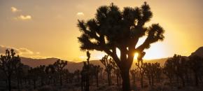 Couchers de soleil, cactus et feuxd'artifice