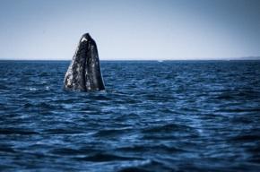 Baleines, plages désertes etpalmeraies